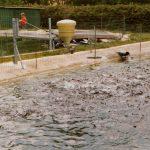 ffaz fischfutterautomat Teichwirtschaft Gartenteich Regenbogenforelle Bachforelle Karpfen Lachs Koi