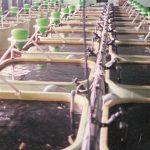 ffaz fischfutterautomat Versuchsanlage Regenbogenforelle Bachforelle Karpfen Lachs