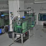 FFAZ automatic fishfeeder Artemia live brine shrimp feeder