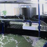 FFAZ automatic fishfeeder Shrimp farm RAS