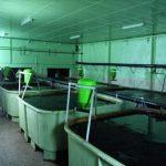 FFAZ automatic fishfeeder breeding young fish