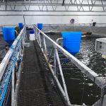 FFAZ automatic fishfeeder feeding