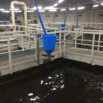 FFAZ automatic fishfeeder feeding fish