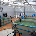 FFAZ feeder used by LandIng Aquaculture