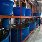FFAZ Fish Feeding feeder rack System
