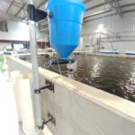 FFAZ fish feeder indoor RAS